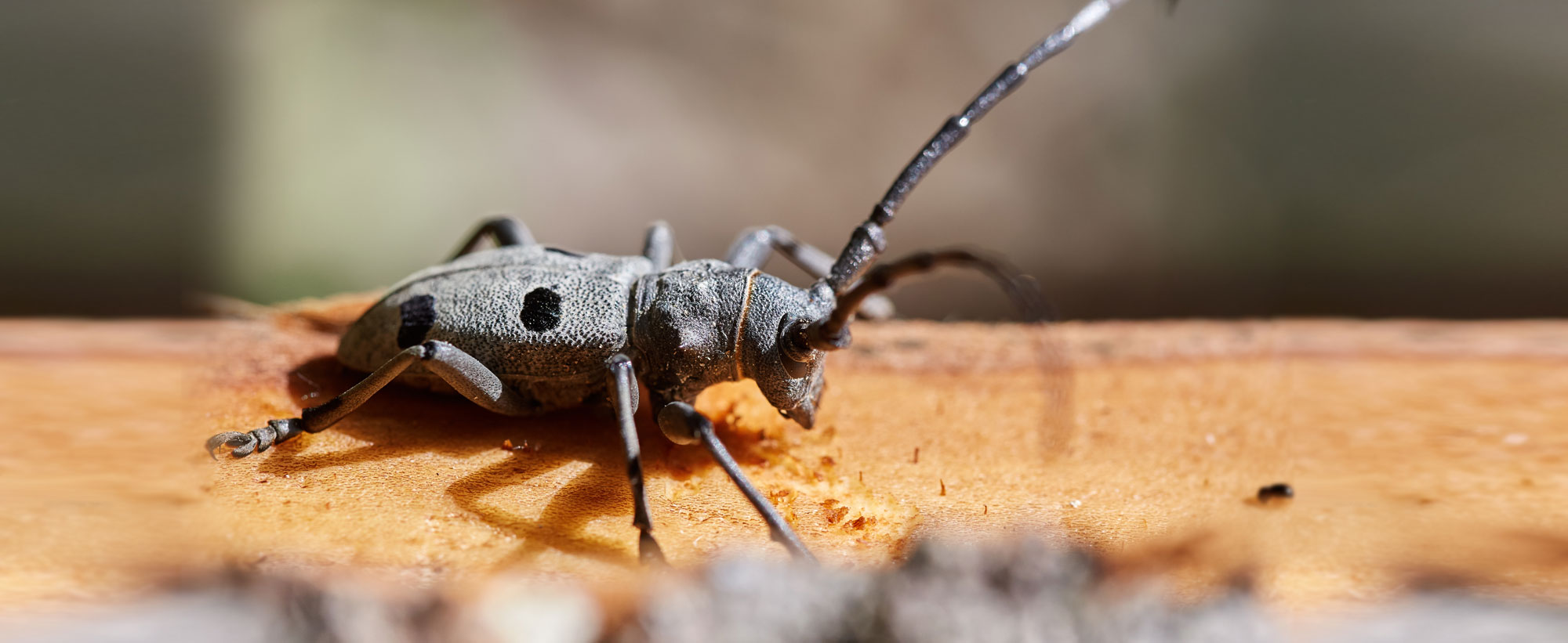 termite-fumigation-specialist-costa-blanca-termites-pest-control