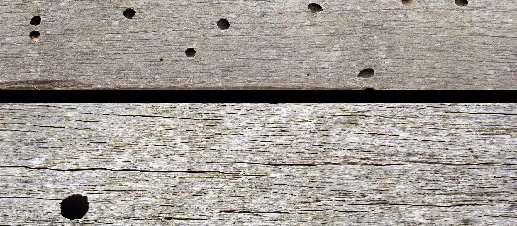 termite-fumigation-eradicvation-specialist-costa-blanca-termites-pest-control